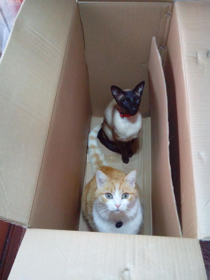 New office chair = cats in an empty box #CatsOfTwitter