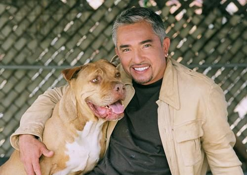 Tips on Training. Some great suggestions based on Exercise, Discipline, and Affection from Cesar Millan.