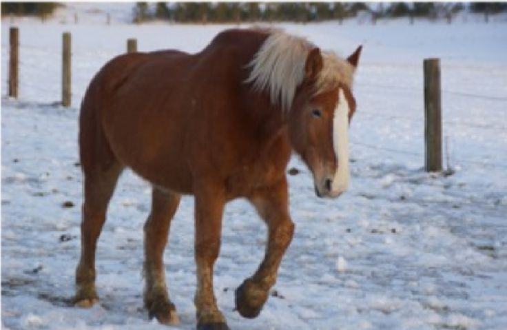 On the ninth day of Christmas...  Follow our story at https://www.facebook.com/pages/Conestogo-River-Horseback-Adventures/300198049923  #12DaysOfChristmas #Waterloo #HorseFilledFun #StockingsForTheHorse #ChristmasStockings #WinterOnTheFarm