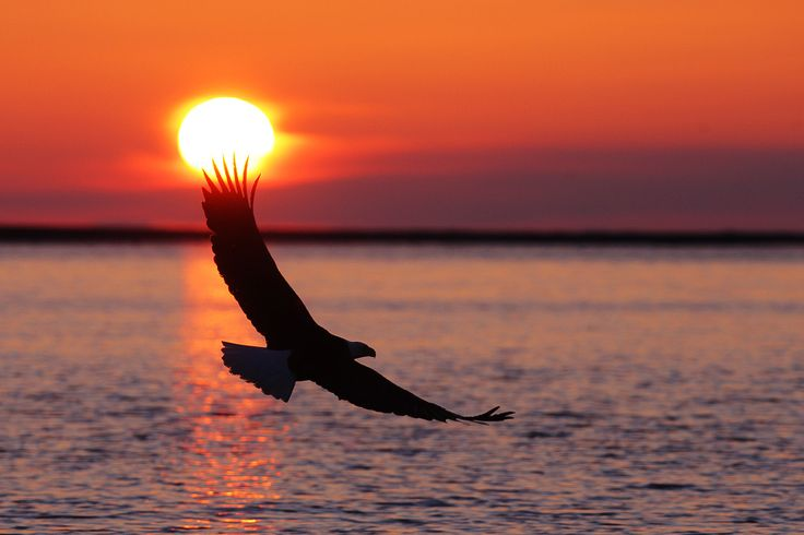 eagle-in-the-sunset-pictures-5