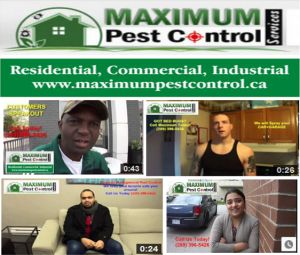 http://ift.tt/1HTKoXB  Residential & Commercial Mouse Control Service Mississauga ON http://ift.tt/1eIZPl4 Mississauga Rats Control Service For Homes And Businesses Near Me By Calling (905) 582 5502.  Virtually all home owners recognize the sensation feeling of worry that comes with finding mice or rats in your house. Whether in the cooking kitchen area attic room cellar or eating space  a rodent discovery could prompt shock as well as mental worry for any house owner.  Rats & Mice look for…