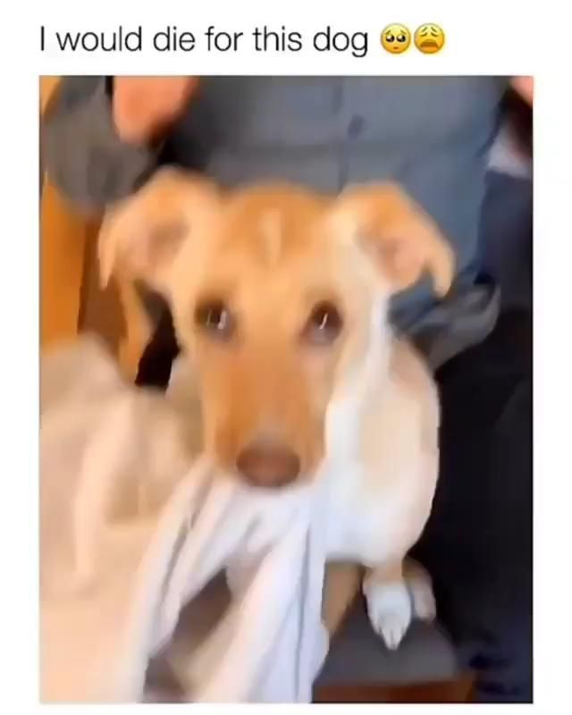 Pet Dog Pets Dogs Cute Dogsofinstagram Cat Love Cats Petstagram Petsofinstagram Animal Puppy In 2020 Cute Funny Dogs Funny Animal Videos Cute Baby Animals