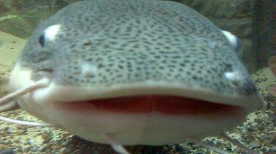 Atrakcyjność w pigułce: Oceanarium
