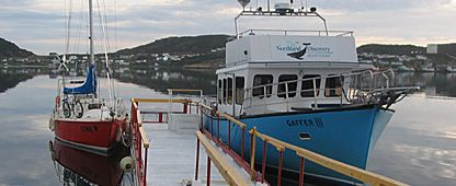 Northland Discovery Boat Tours - Iceberg and whale watching, St. Anthony, Newfoundland