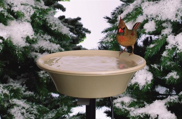 DIY Heated Bird Bath