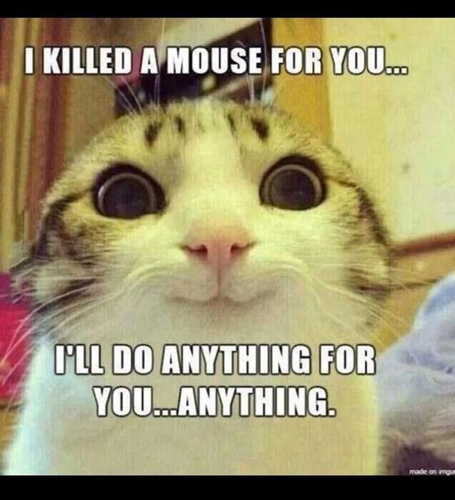 Cat Meme Of The Decade Best Cat Memes Funny Cat Memes Cat Memes