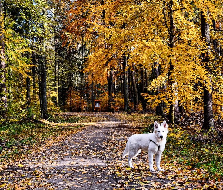 1657 best 3 poland polska europe images on pinterest dog park and fall leaves poland by mariusz kuli on publicscrutiny Gallery