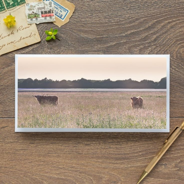 Single Blank Card by landscape photographer Nina K Claridge – Lancashire Cattle