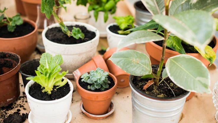 Entenda o que os vegetais pedem: de luz, água e alimentos  até mesmo insetos para se desenvolver de forma saudável.