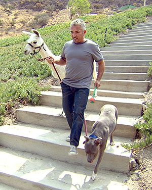 "Faith, fear, and the first step | Cesar Millan ""Take the first step in faith. You don't have to see the whole staircase, just take the first step."""