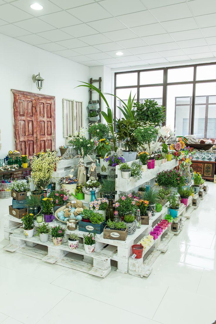 Secţia Garden DecoDepot. Ghiveci. Flori fel şi fel. Decoraţiuni de grădină. DecoDepot. Brasov. Garden section. Pots. Flowers. Greenery. Garden. Decoratives.