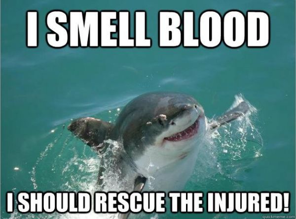 Misunderstood shark! Thanks for helping!