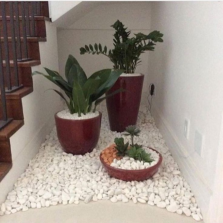 Plants Under Stairs Staircases  Plants  Under  Stairs
