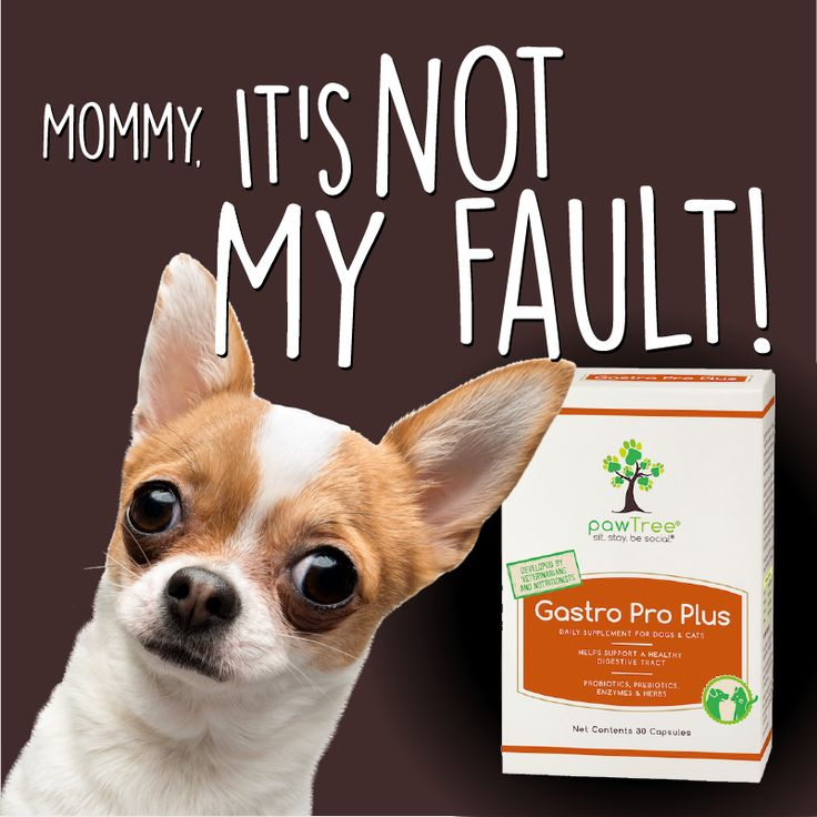 Mommy, it's not my fault! Do you have a pet with some digestive issues? ALL  dogs and cats, any size, any breed, need Gastro Pro Plus to help keep their  GI ...