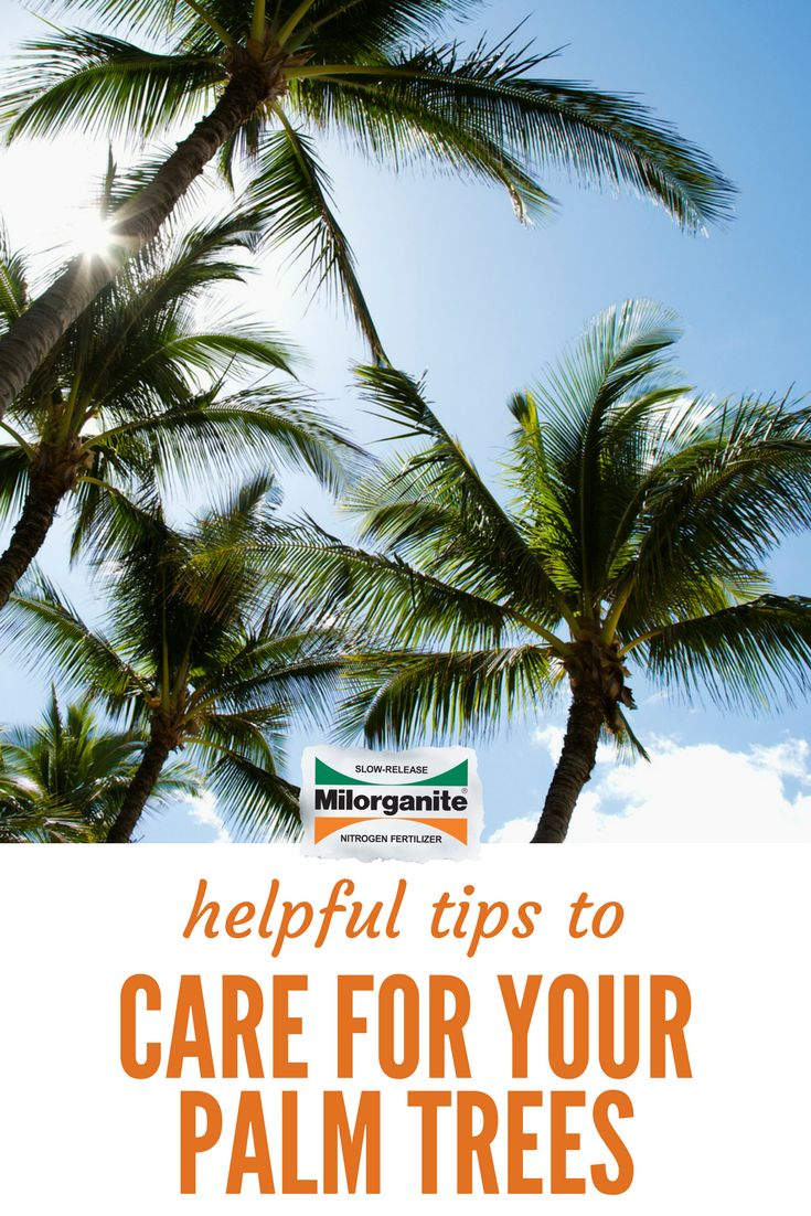Best 25+ Palm tree care ideas on Pinterest | Garden ideas with ...