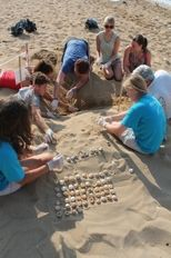 Volunteers excavate a nest to determine its success rate     check it out at wildlifesense.com
