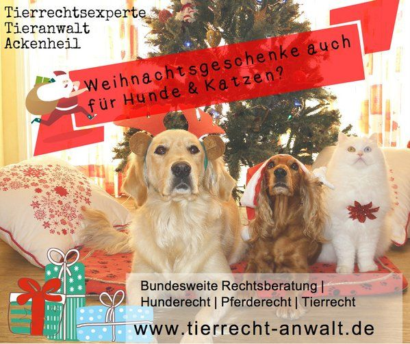 #Weihnachtsgeschenke #Hund #Pferd #Katze? http://on.fb.me/1OhFtg9