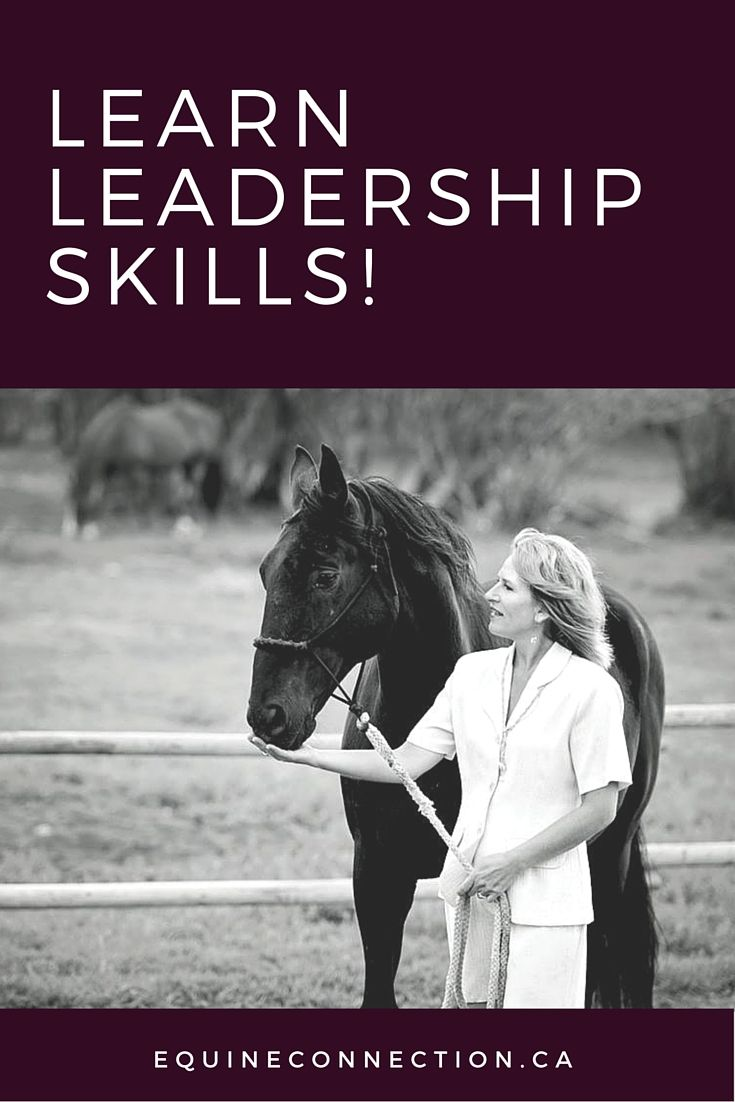 Our Certified Equine-Assisted Learning (EAL) program takes your employees out of the regular 'classroom' setting and ratchets up their critical skills and competency at each leader-level though horse/human interaction.