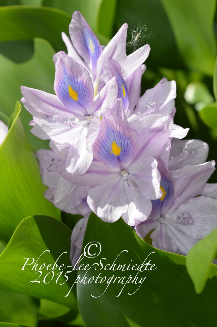 lovely purple flower in bali, 2014