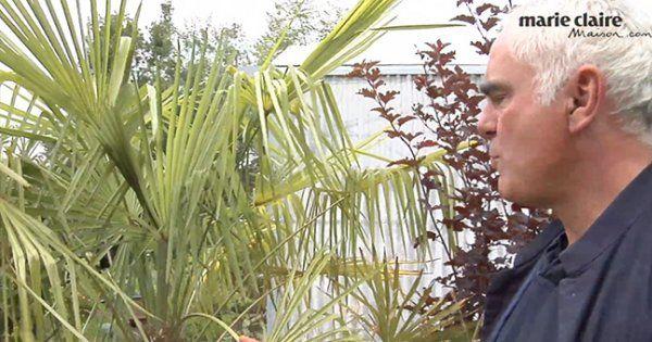 arbuste persistant à feuillage vert ou pourpre, arbuste à feuillage