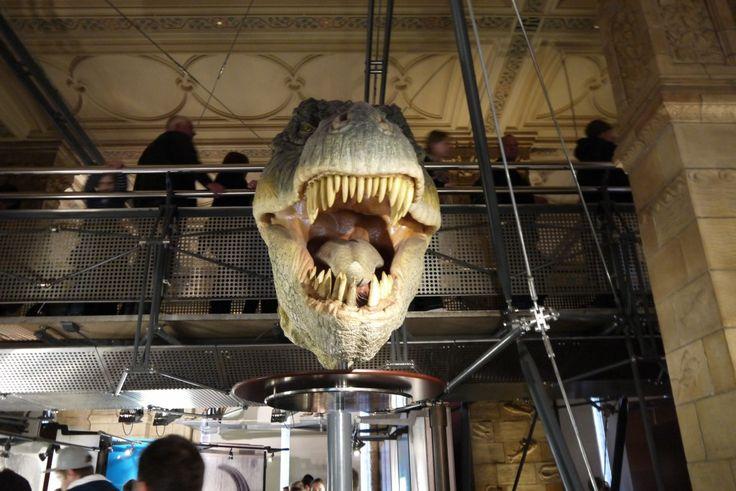 T-Rex head - Natural History Museum