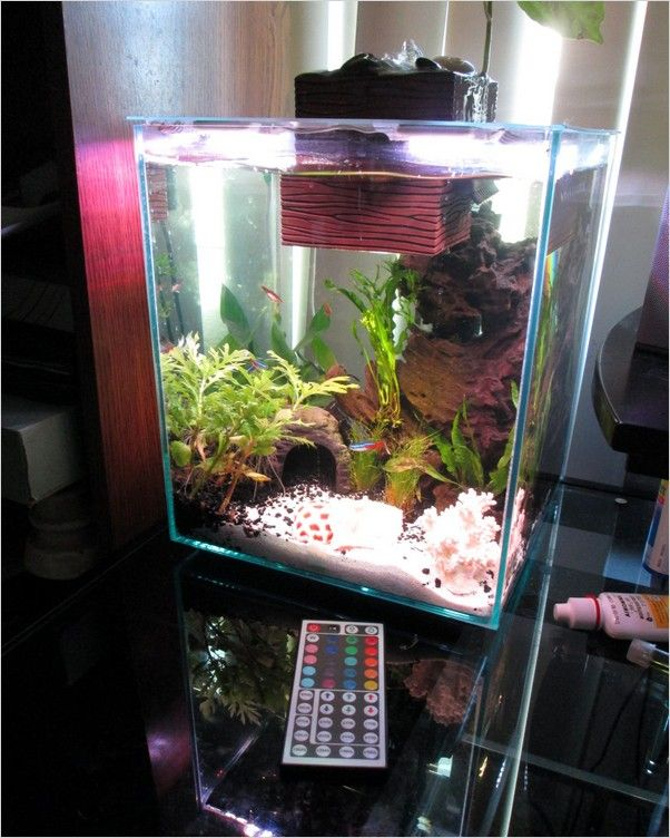 Fish Tank And Accessories Near Me Aquarium Accessories And Decor Give Your Fish A Comfortable Welcoming Home That S Filled