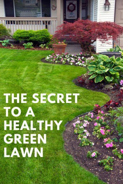 Secret Lawn Tonic Recipe From Golf Course Groundskeeper | Secret Tips to Keep Your Lawn Healthy | Homemade Lawn Fertilizer Recipe | How To Take Care Of Your Lawn Hack | DIY Lawn Care Tips | Easy Lawn Fertilizer Schedule | How To Grow A Thick Lawn | Best G