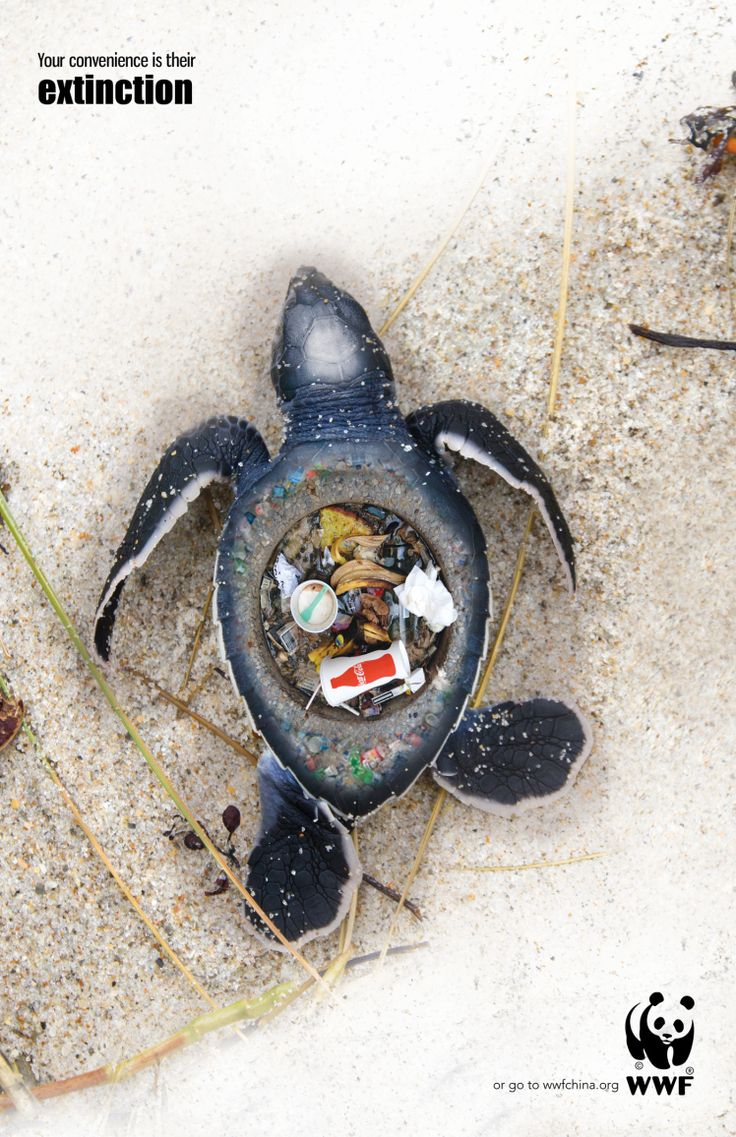 Dude!,all I can say is WOW!,These pictures should make you think twice about littering. Devastating images that show the effect of rubbish left on our beaches.