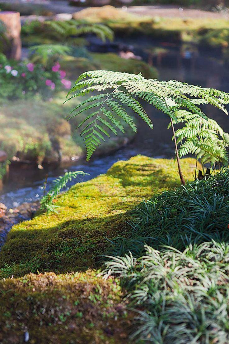 จ ดสวน มอสส แรงบ นดาลใจจากป าด บช น บ านและสวน สวนป า จ ดสวน แบบสวน