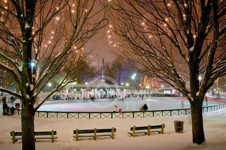 Christmas lights at the Frog Pond skating rink in Boston Common, Boston, MA  by Susan Cole Kelly