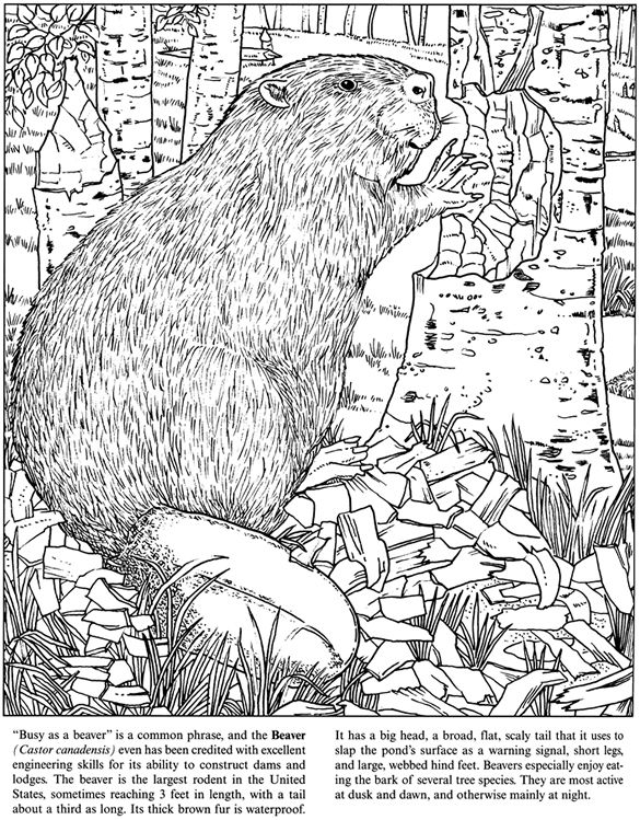 Welcome To Dover Publications Freshwater Pond Coloring Book