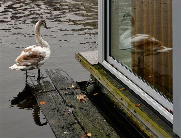 Spiegelbeeld aan de Amstel in Amsterdam...