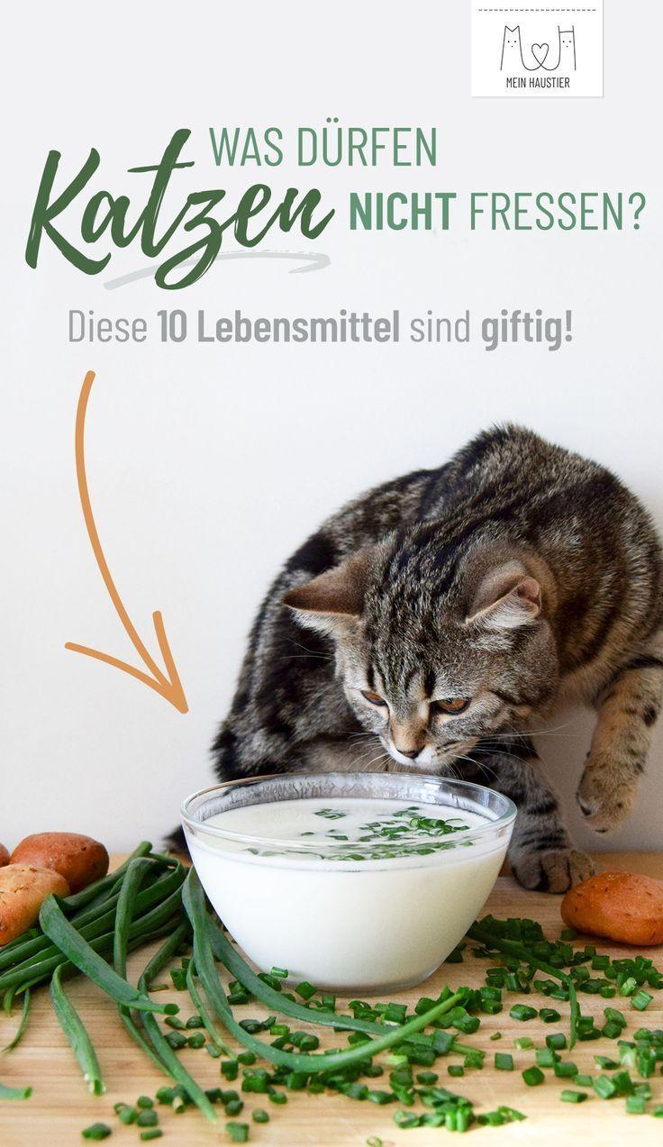 Katzenliebe In 2020 Katzen Katzen Futter Katzen Milch