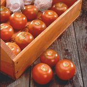 Longkeeper Tomato 70 days. This storage tomato will keep up to 3 months! Gather the mature green or partially ripe fruit before the first frost. Place the tomatoes in a carryout nursery flat, or position on newspaper on a shelf. Arrange in a single layer without shoulders touching. Storage area temperatures should be 55-75°F, and out of direct light. The 3 inch fruit ripen to an orange/red color. Semi-determinate. F 1, V. Also available as a plant. OP 3.85/Approximately 35-40 seeds per 1/8…