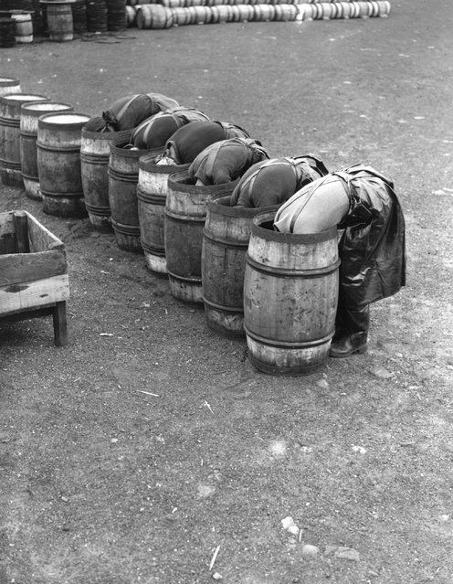Fisherwomen laying barrels with salt in preparation for herring curing, 1937