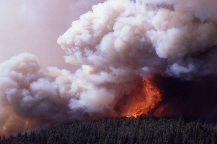 The Yellowstone Fires of 1988   TrailMob.com