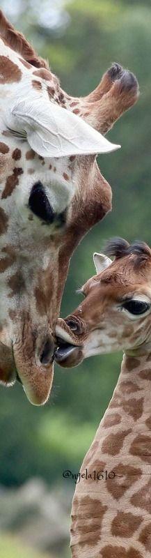 Baby kissing ma