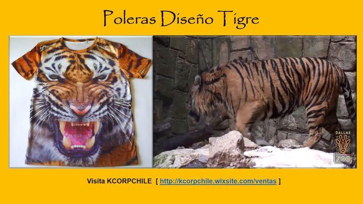 Aviso video tigre ene 2017
