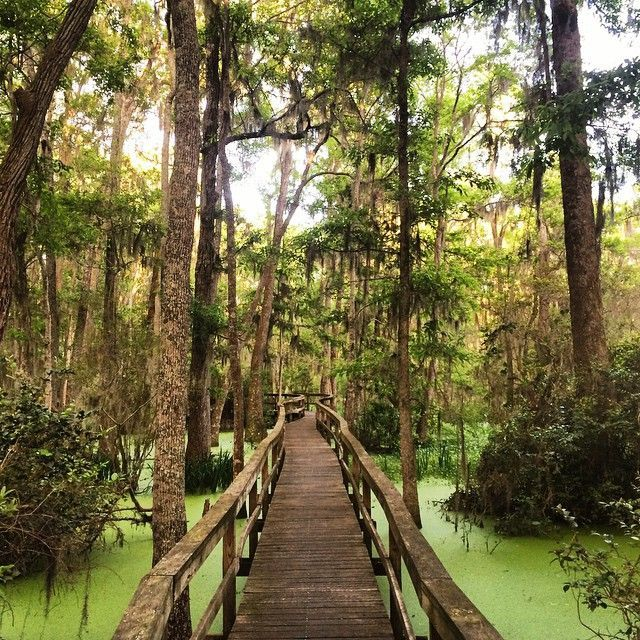 Whooping Crane Conservancy, #HiltonHead Island, #SouthCarolina is a great place to visit. #itrip #vacationrental #travel