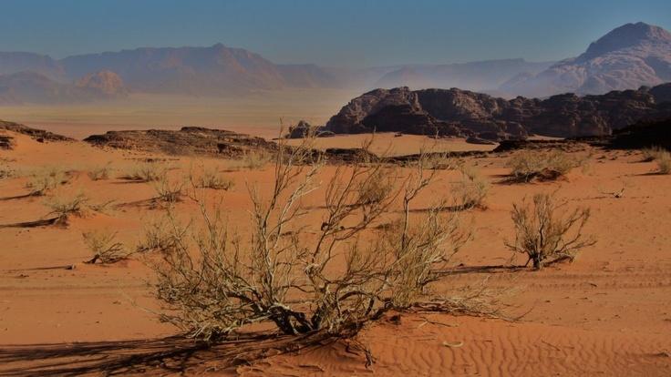 Desert in Jordan, near Wadi Rum  Landscapes   LESS BLATHER, MORE BITE