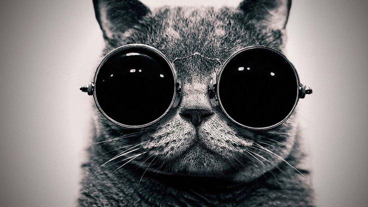 Fondo de pantalla gato hipster / Wallpaper hipster cat