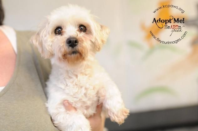Pin On Dogs To Adopt