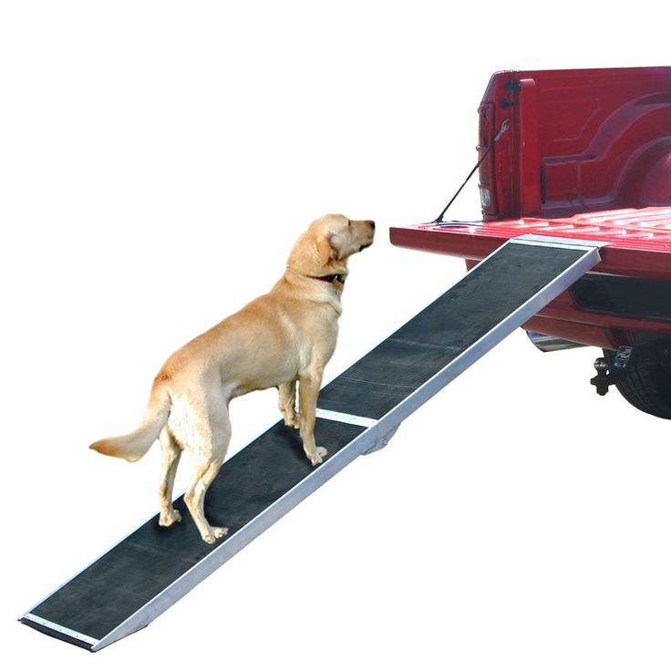 Folding pet ramp used with pickup truck