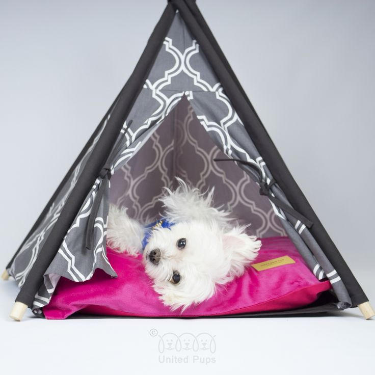 Sorry... Today I just want to be cozy here. http://unitedpups.com/gray #teepee #dogbed #puppylove #dogsofinstagram #doglover #whitedog #aplacetolovedogs #dogoftheday #petlove #puppy #animalphotos #tipi #cat #dog #tent #poodle #yorkie #frenchie #pug #shihtzu #paw #pomeranian #chihuahua #maltese #doghouse #unitedpups #cathouse #playtent #cozy