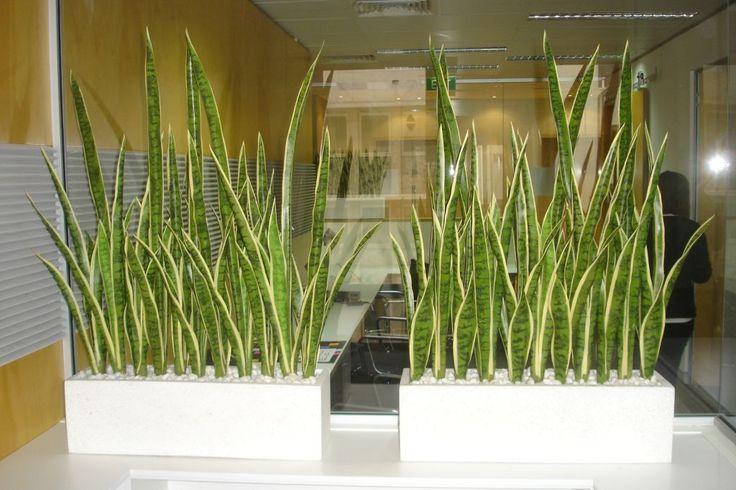artificial planting office screening