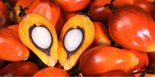 Is Palm Oil Bad?