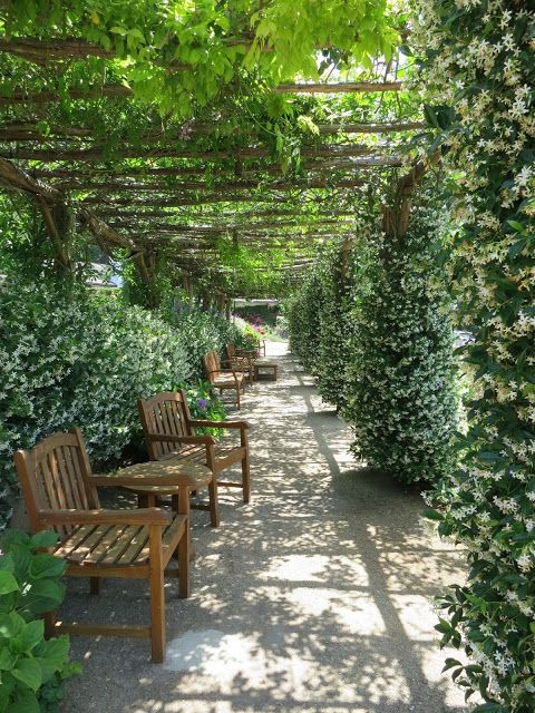 Star jasmine climb the posts + clematis covers the pergola