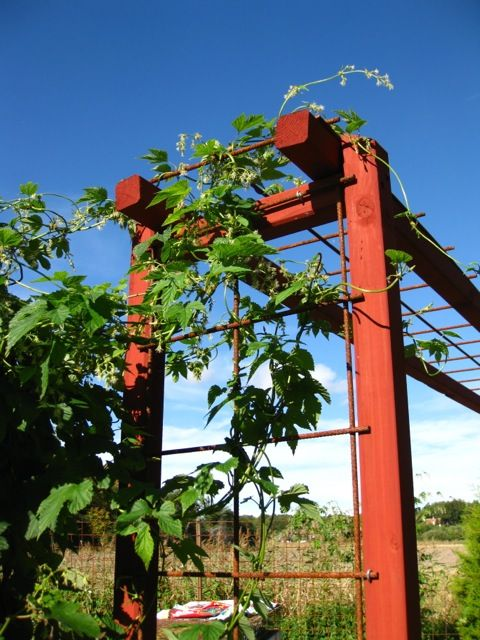 Portal vid köksträdgården