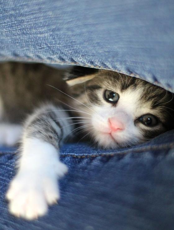 A Kitten Mitten.