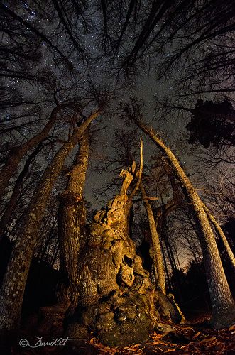 Starry Night & 1000 Year Old Chestnut Tree